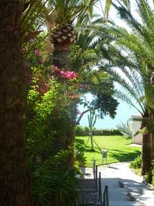 Bajada a la playa rodeada de palmeras y plantas...